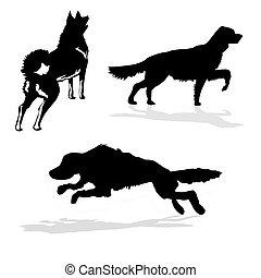 silhouette hunt dogs on white backg