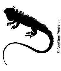 silhouette, iguane