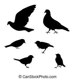 silhouette, illustration., achtergrond, vector, witte , vogels