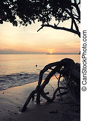 silhouette image of mangrove tree on the beach with stunning sunset background