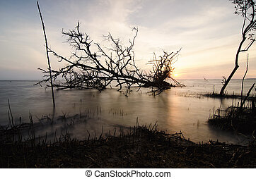 silhouette image of stumps and root dead mangrove tree fallen on the sea with stunning sunset background