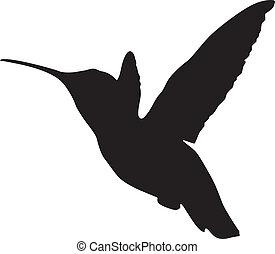 silhouette, kolibrie