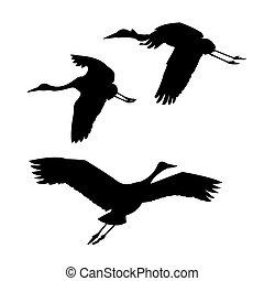 silhouette, kranen, vliegen, vector, achtergrond, witte