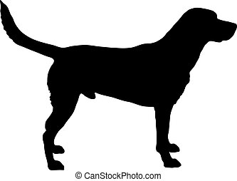 silhouette, labrador