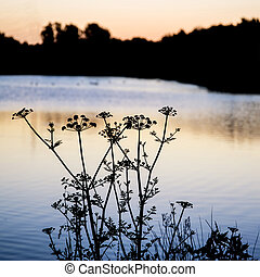 silhouette, lac, levers de soleil, feuillage, aube, paysage
