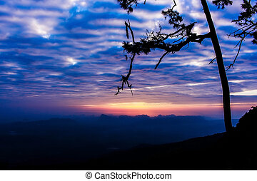 Silhouette landscape mountain with tree at sunset