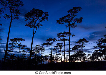 silhouette landscape with pine tree