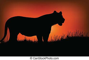 silhouette, leopard