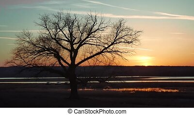 silhouette lonely tree sunset sun the nature landscape...