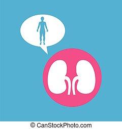 silhouette man kidneys anatomy body