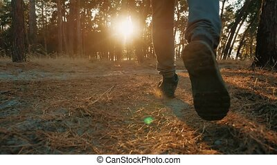 silhouette, nature, athlétique, jeune, pin, sain, courant, sunlight., homme, style de vie, sport, forêt
