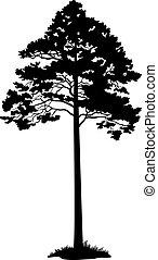 silhouette, noir, arbre pin