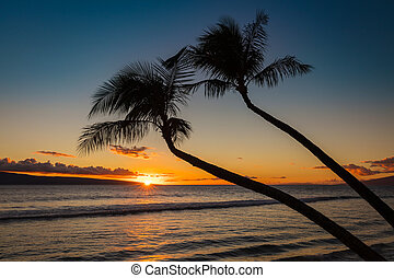 Silhouette of 2 palm trees at sunset