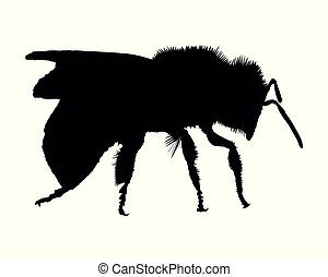 Silhouette of a bee on white background