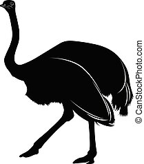 silhouette of a bird ostrich isolated on white background