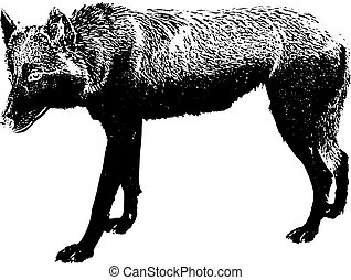 Silhouette of a black wolf, on white background,