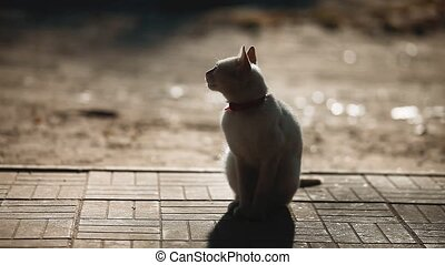 silhouette of a cat in the summer on the sidewalk. white cat sitting outdoors silhouette sunlight. cat silhouette concept lifestyle