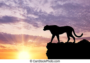 Silhouette of a cheetah looking into the distance