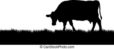 cow - silhouette of a cow