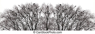 Silhouette of a crow on a tree