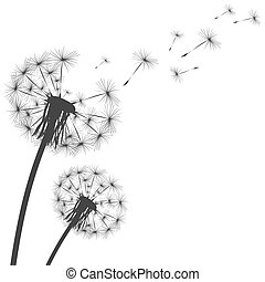 Silhouette of a dandelion on a white background