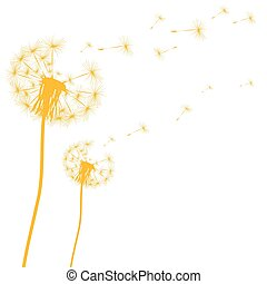 Silhouette of a dandelion on a white background vector