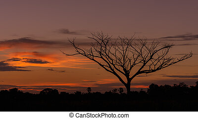Silhouette of a dead tree