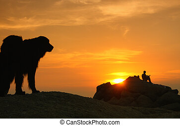 silhouette of a dog on the cliff