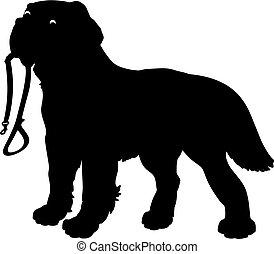 Silhouette of a Dog (Saint Bernard) holding a leash, on a white background.