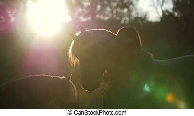 Silhouette of a girl who walks with horses in the woods on...