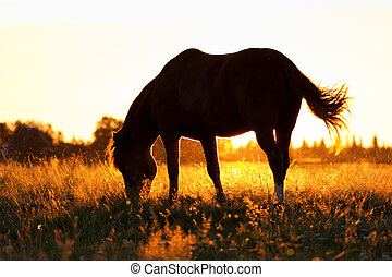 Silhouette of a horse on a pasture in rim light