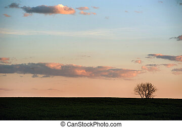 silhouette of a lone tree in a field on a background of picturesque evening sky.