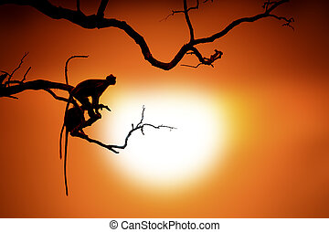 Silhouette of a monkey on tree in sunset