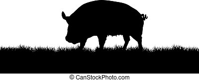 pig - silhouette of a pig