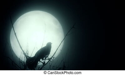 Silhouette of a raven against a full moon - Bird against a...