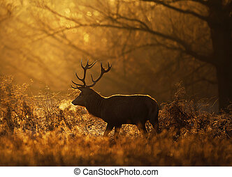Silhouette of a Red deer stag