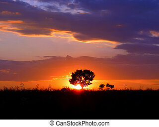 Silhouette of a single tree against the setting sun