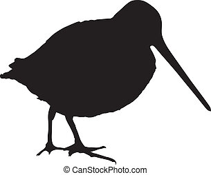 Silhouette of a snipe