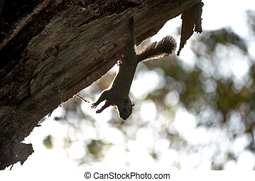 Silhouette of a squirrel on a tree.