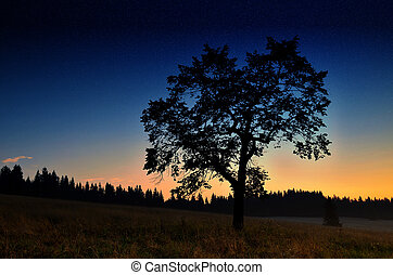 Silhouette of a tree at sunset and starry sky