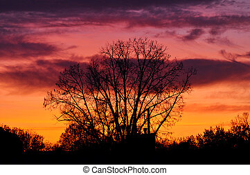 Silhouette of a tree at sunset