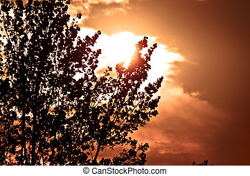 Silhouette of a tree before sunset