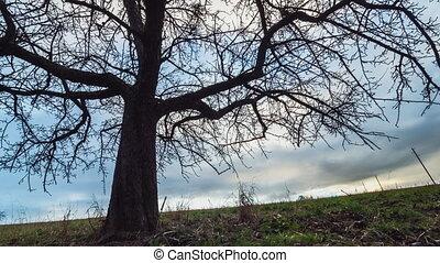 silhouette of a tree in sundow