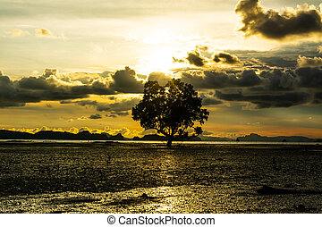 Silhouette of a tree in the evening