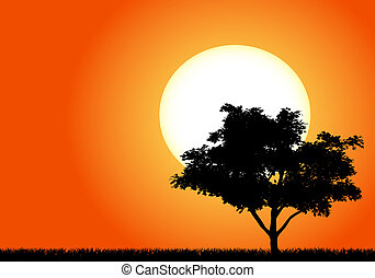 Silhouette of a tree in the sunset of Africa