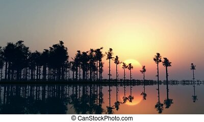 Silhouette of a trees in the water