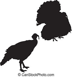 Silhouette of a turkeys