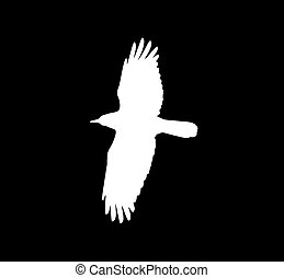 silhouette of a white crow on a black background