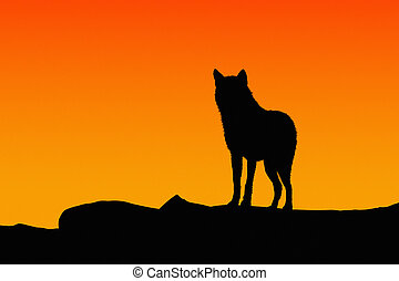 Silhouette of a wolf on sunset.