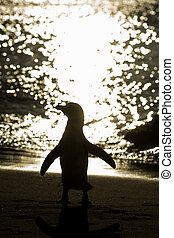Silhouette of African penguin on the beach
